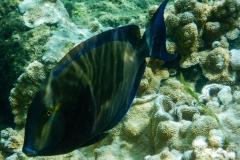 Blue-Fish