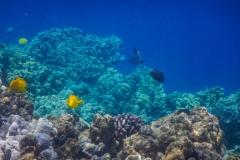 Coral-Ledge