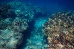 Coral-Ravine