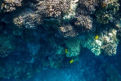 Coral-Reefs-2