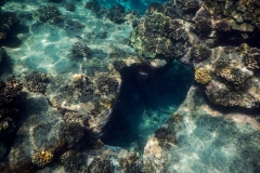 Coral-Sea-Arch