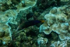 Multi-Colored-Fish