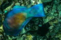 Neon-Fish-2