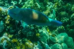 Neon-Fish-3