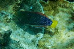 Neon-Fish