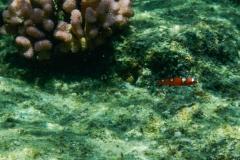 Ornge-Fish