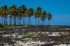 Place-of-Refuge-Palm-Trees
