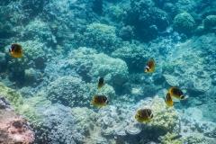 School-of-Yellow-Fish-2