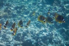 School-of-Yellow-Fish