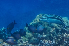 Several-Fish