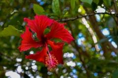 Weird-Red-Flower