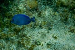 Fish-5