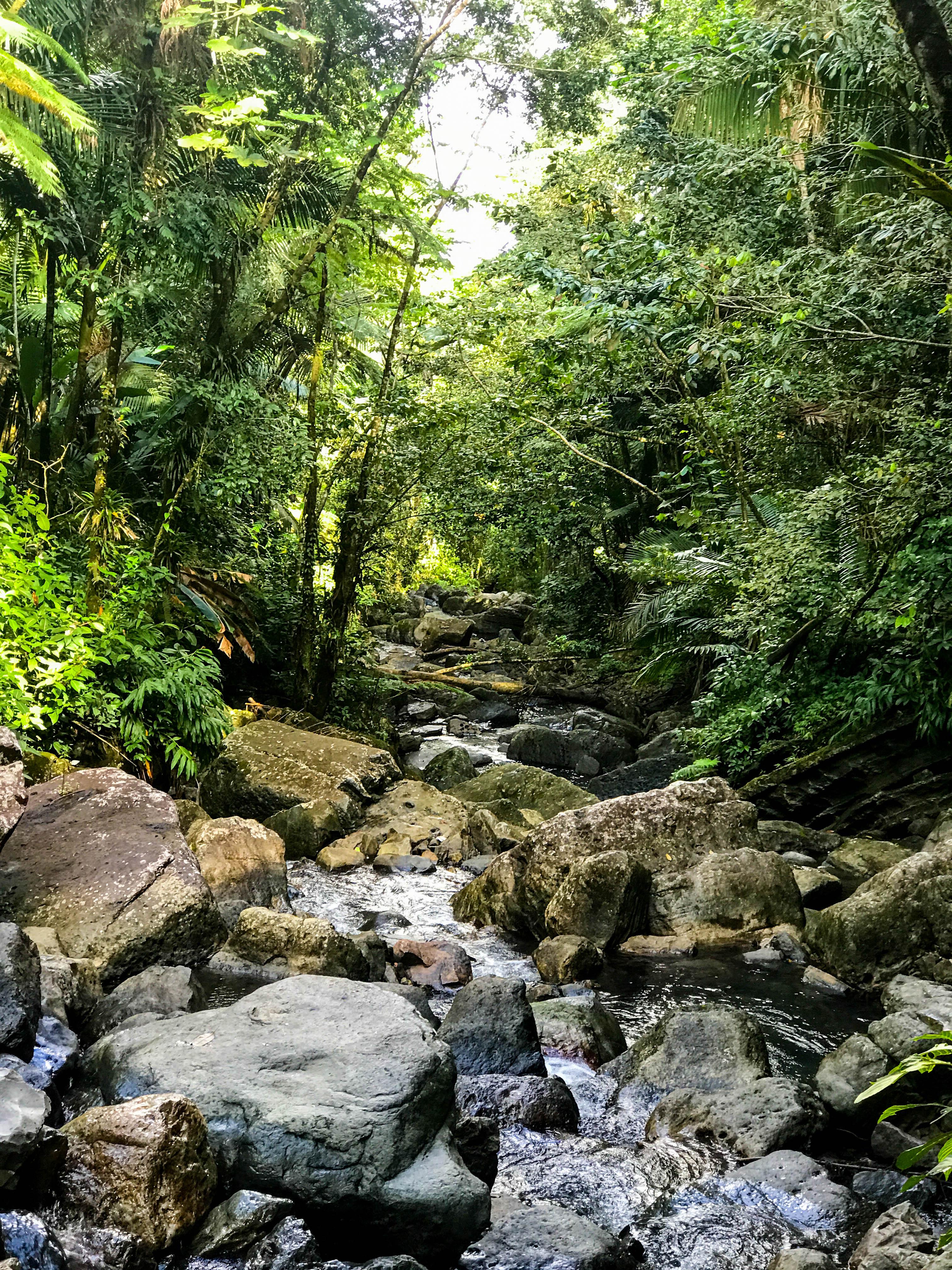 Rainforest-11