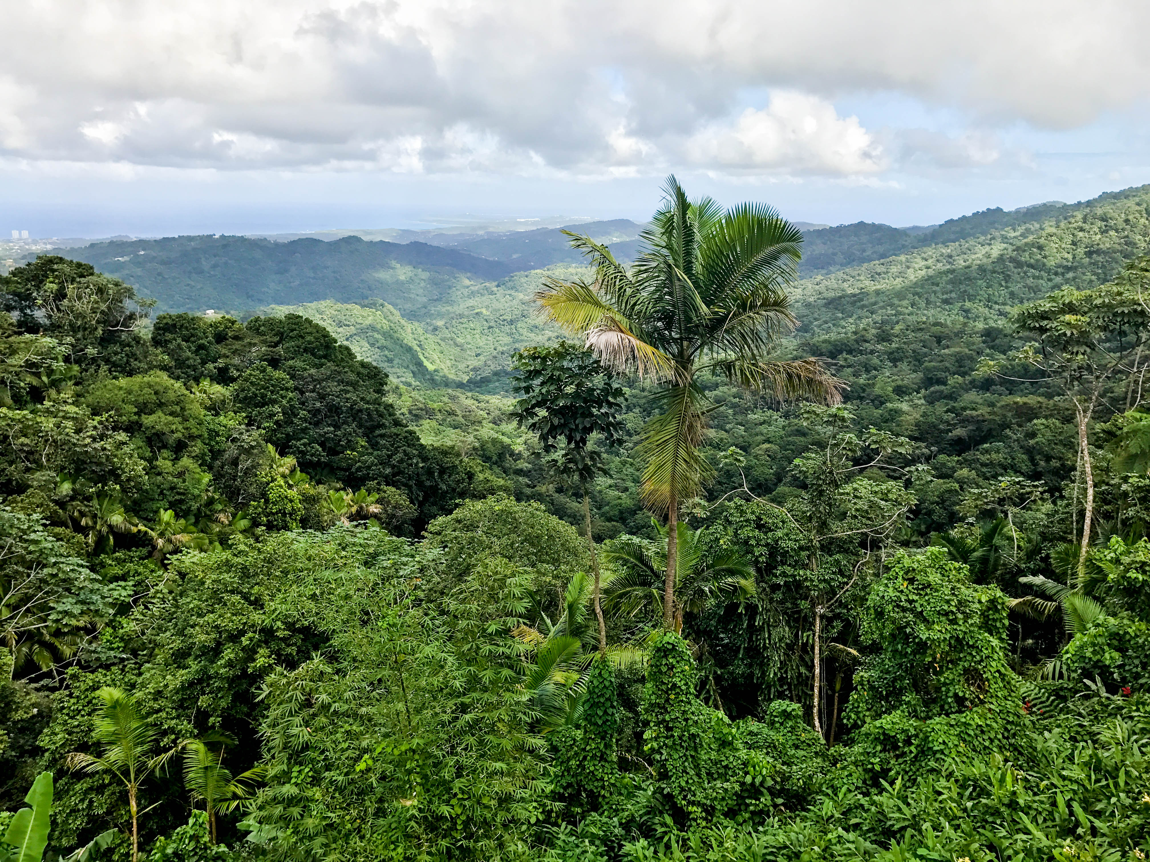 Rainforest-2
