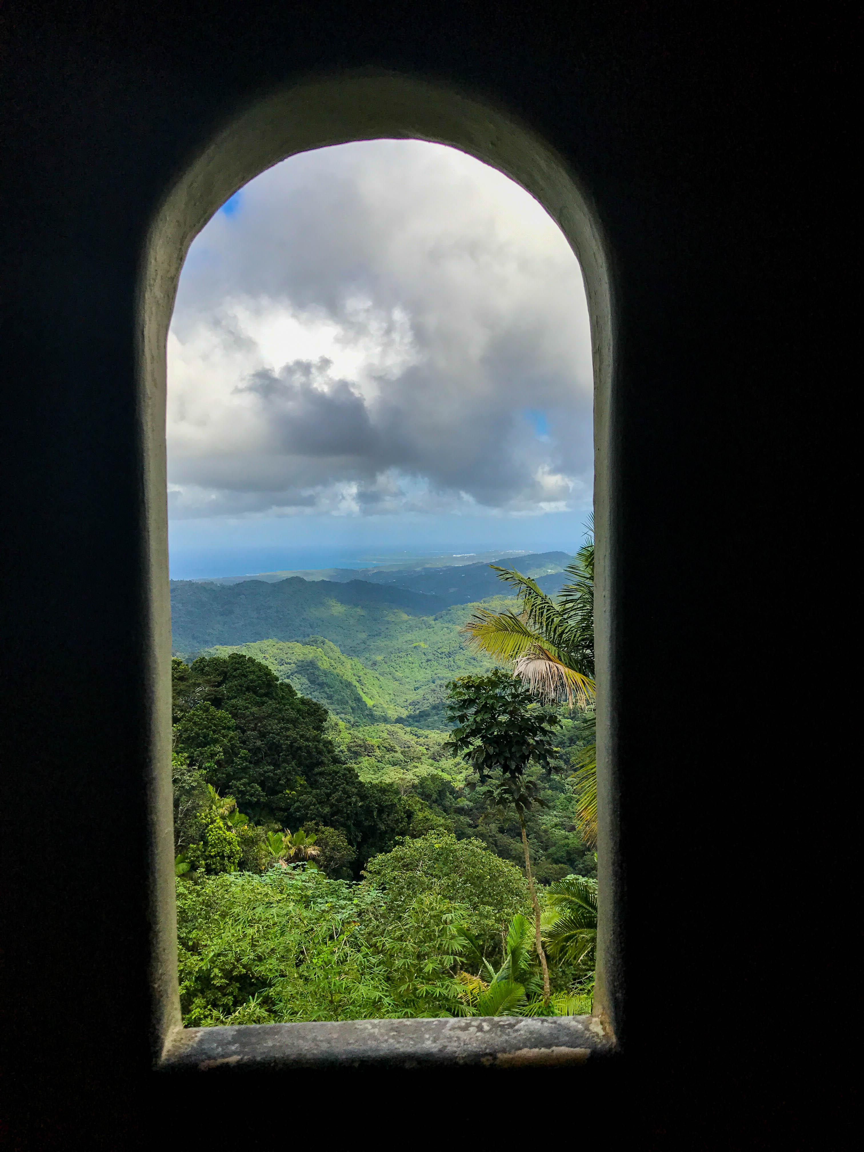 Rainforest-3