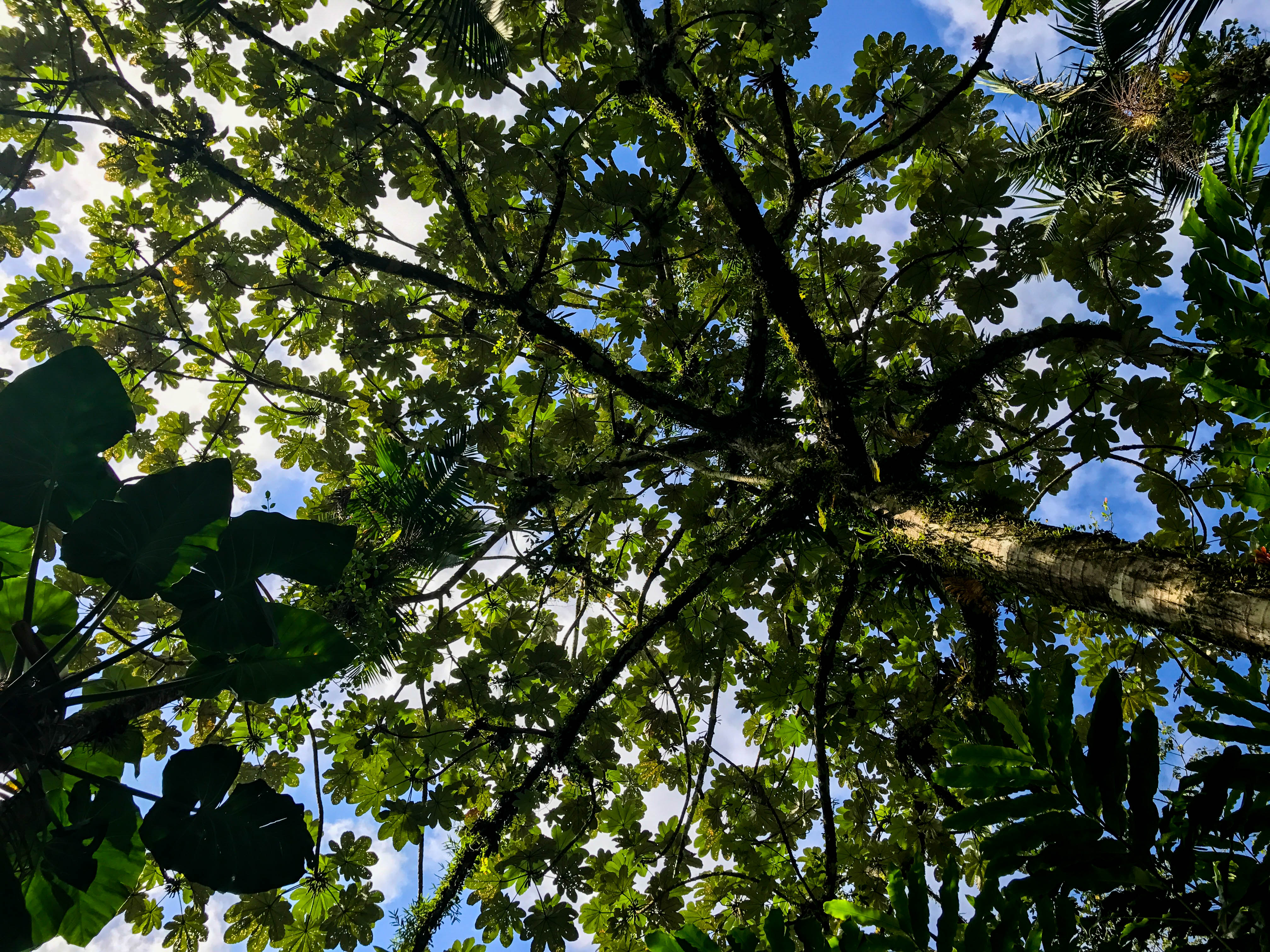 Rainforest-5