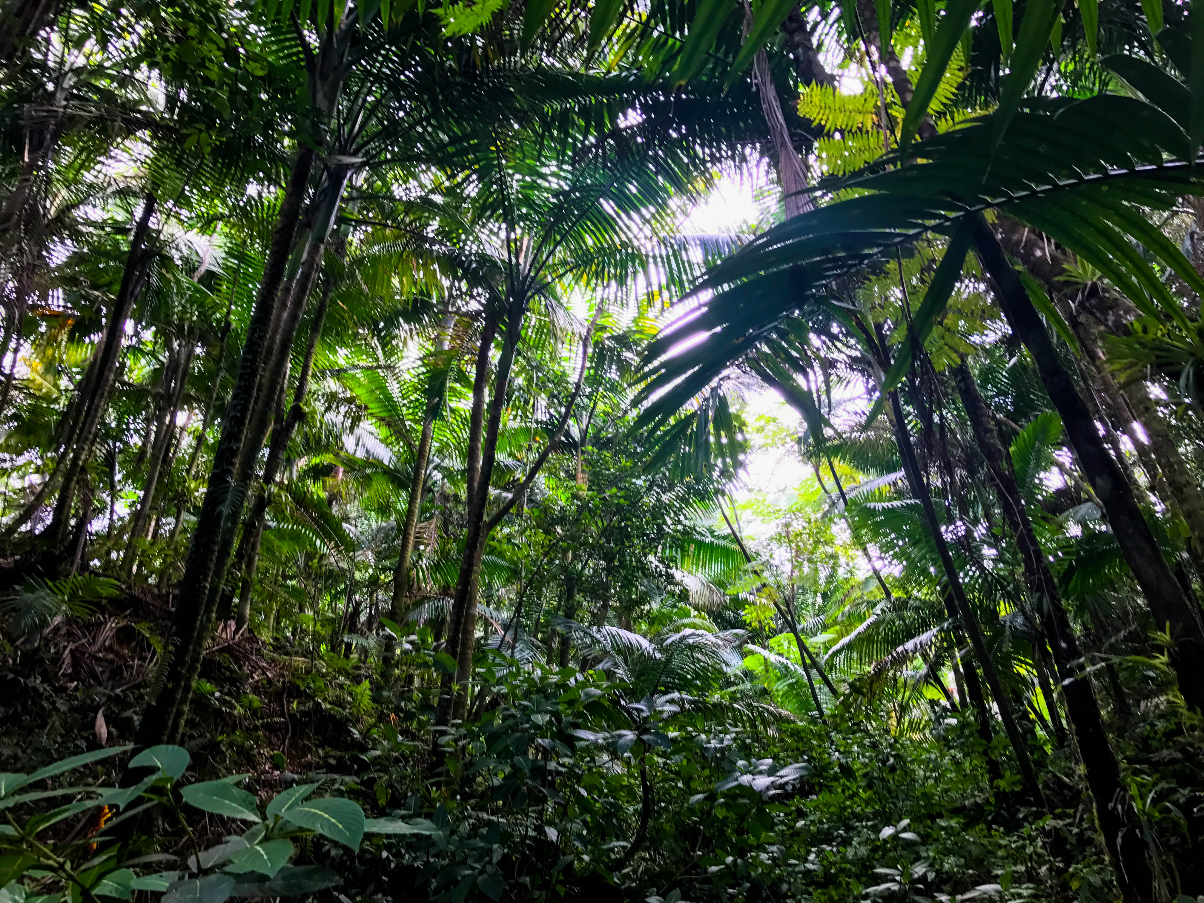 Rainforest-6