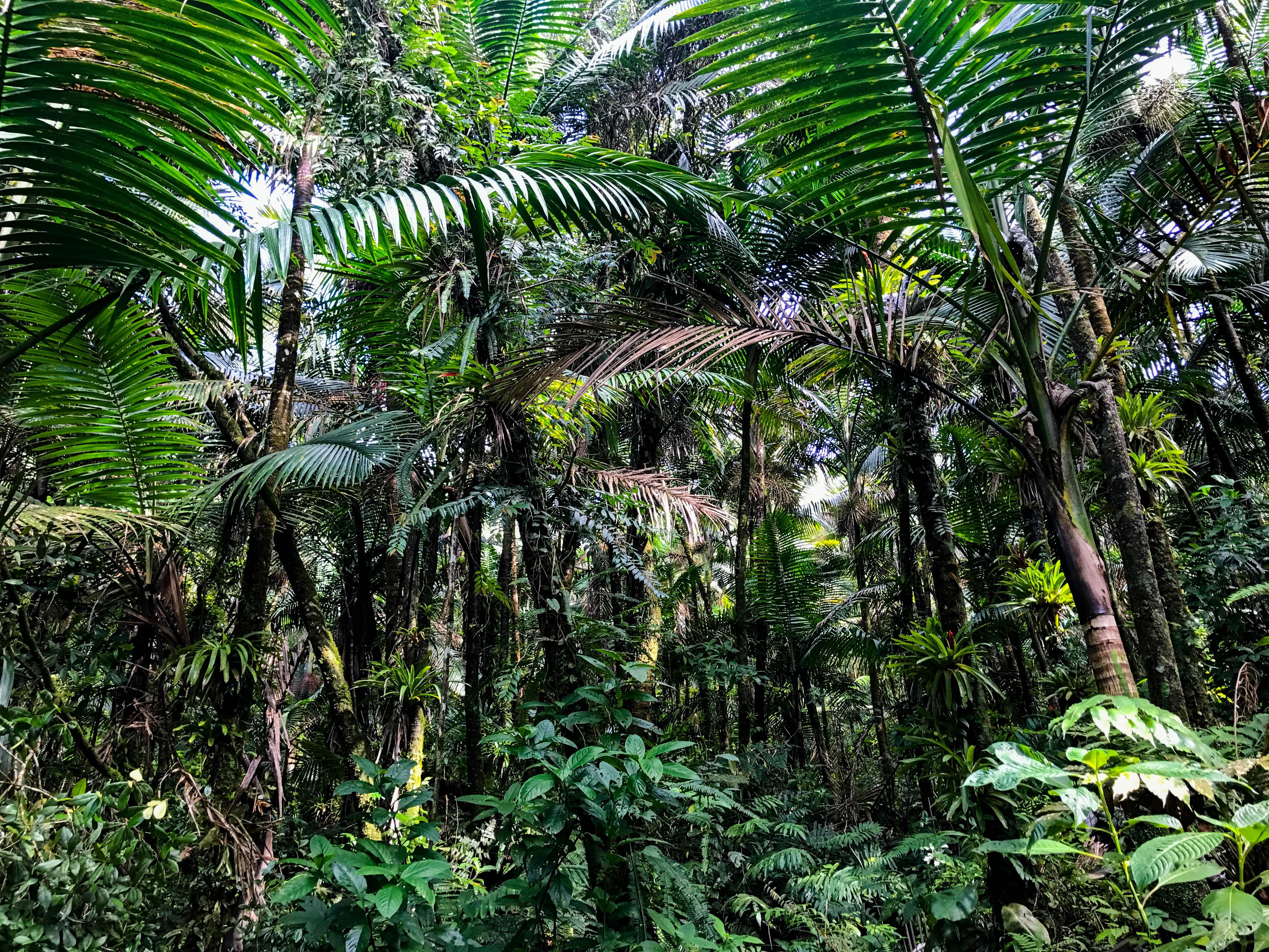 Rainforest-7