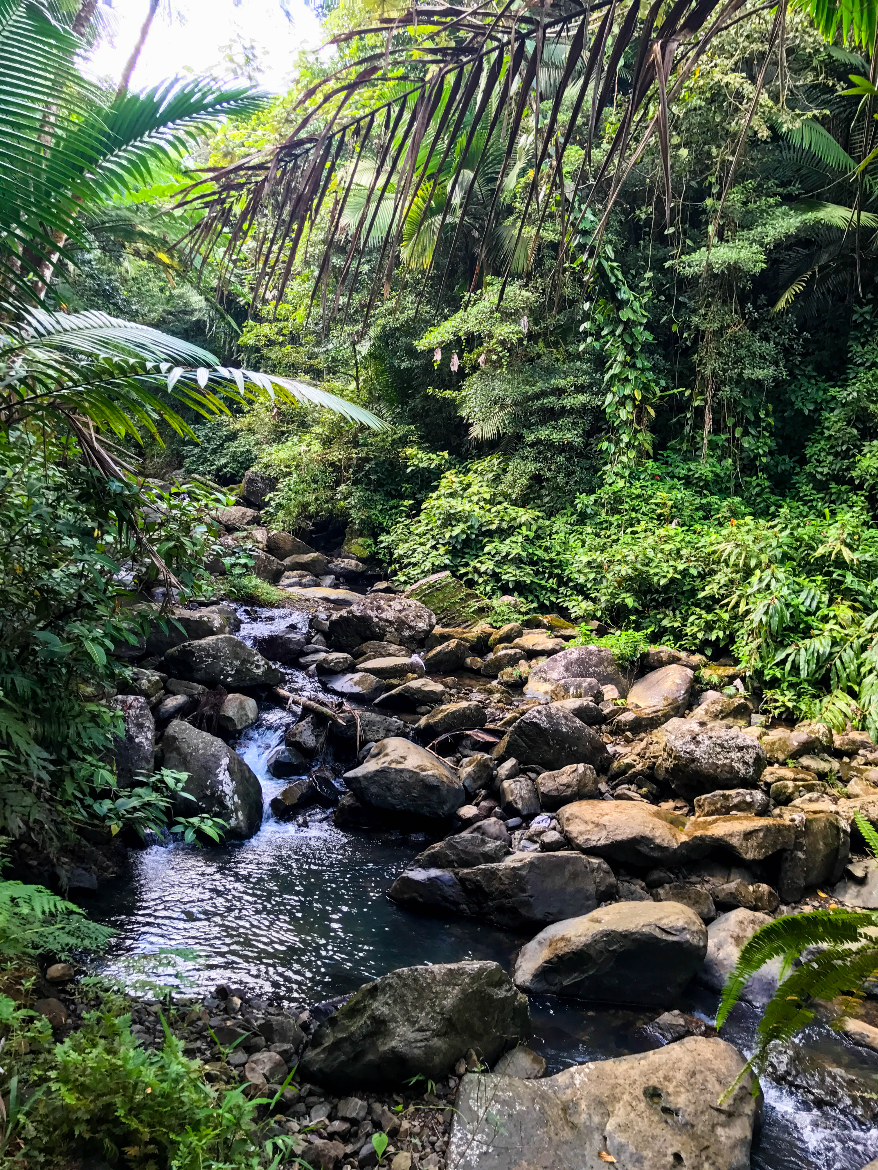 Rainforest-9