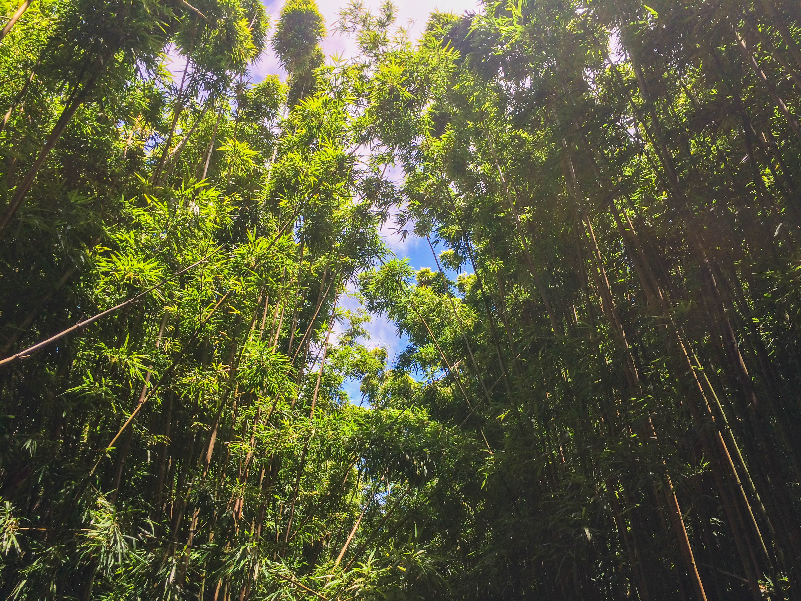 Bamboo-Forest-2