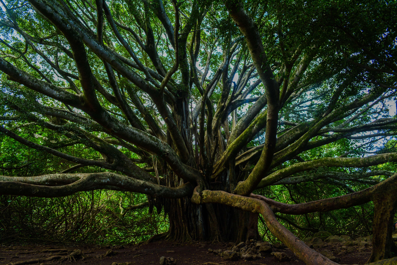 Crazy-Tree