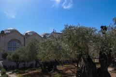 Garden-of-Gethsemene