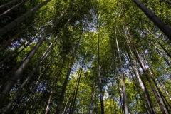 Arashimaya-Bamboo-Forest-3