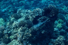 Coral-Reef-3-2