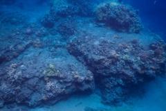Coral-Reef-4