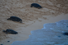 Turtles-on-the-Beach