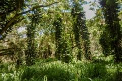Viney-Trees