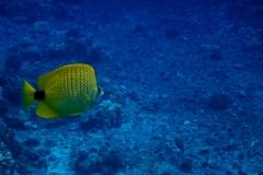 Yellow-Fish