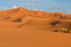 Sahara-6