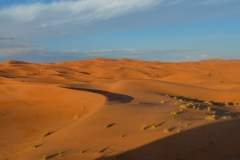 Sahara-7