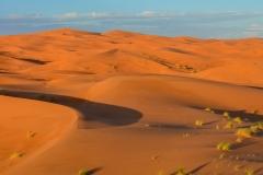 Sahara-9