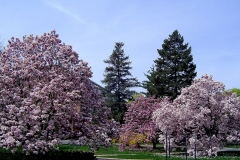 Spring-on-MSU-1