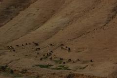 Negev-Desert-2