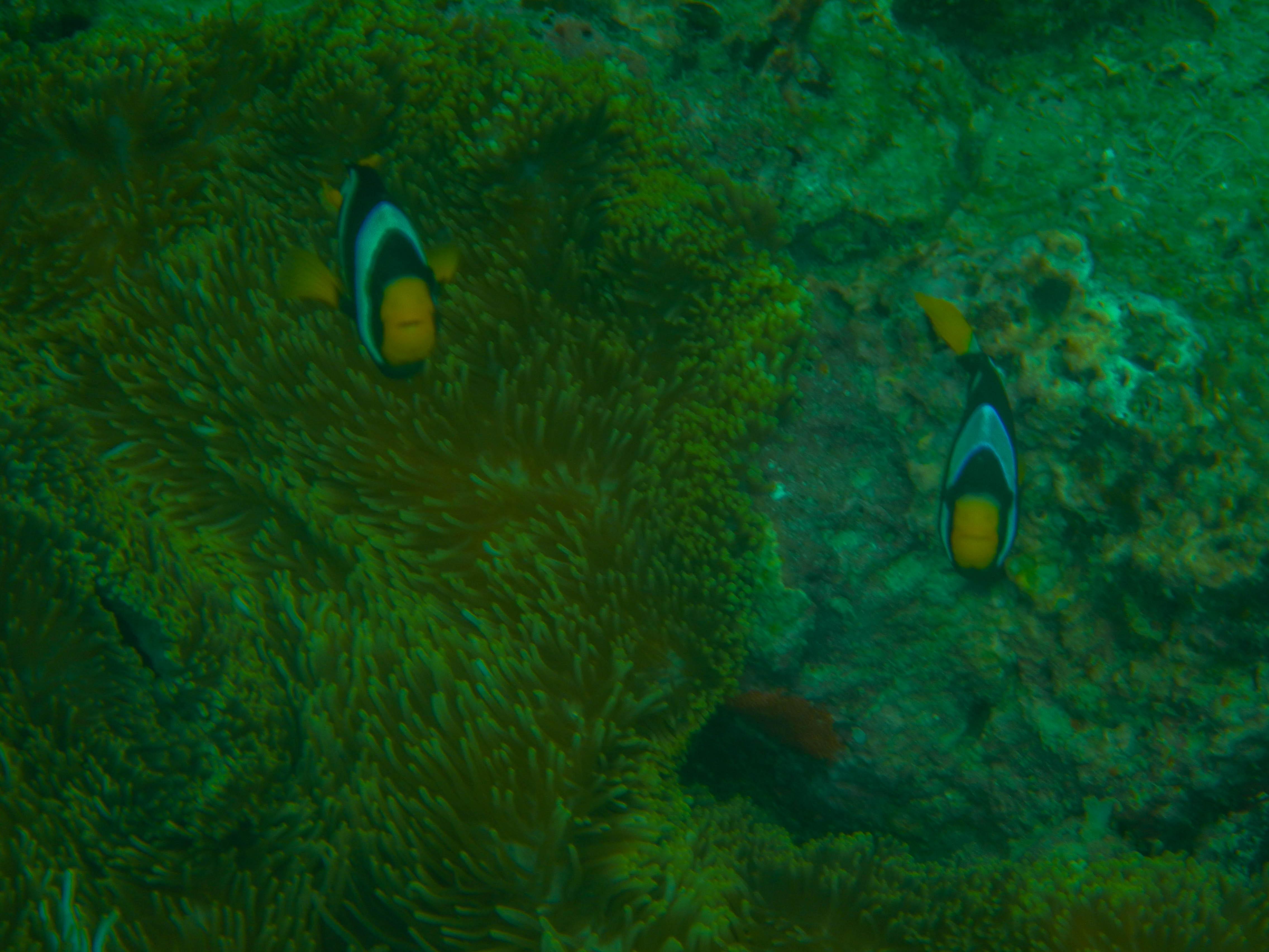 Fish-4