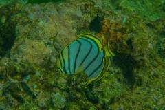 Fish-13
