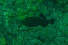 Fish-14