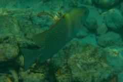 Fish-22