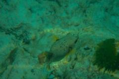 Fish-23
