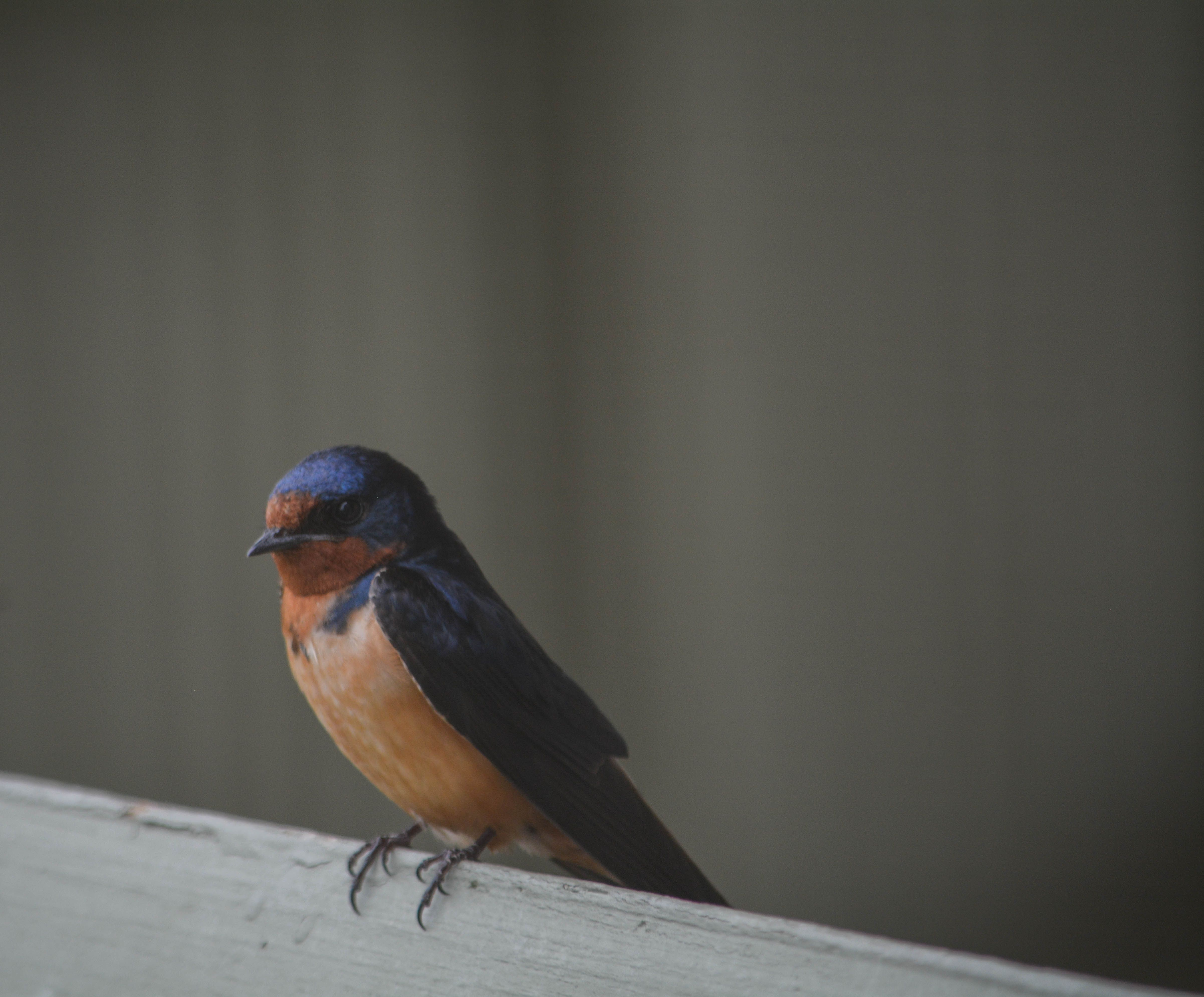 Bird-I-Dont-Know