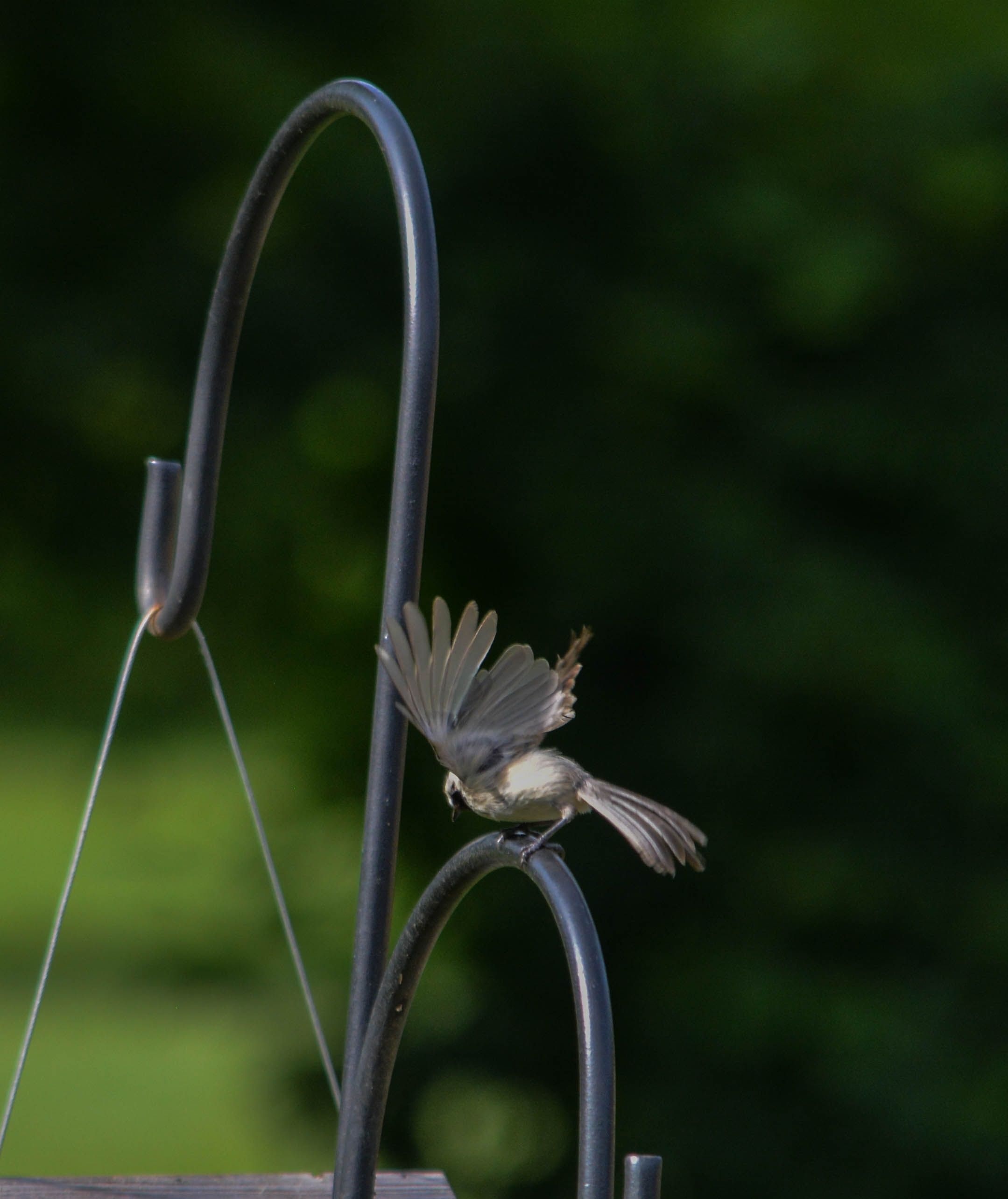 Bird-Wings-Spread
