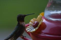 Hummingbird-9