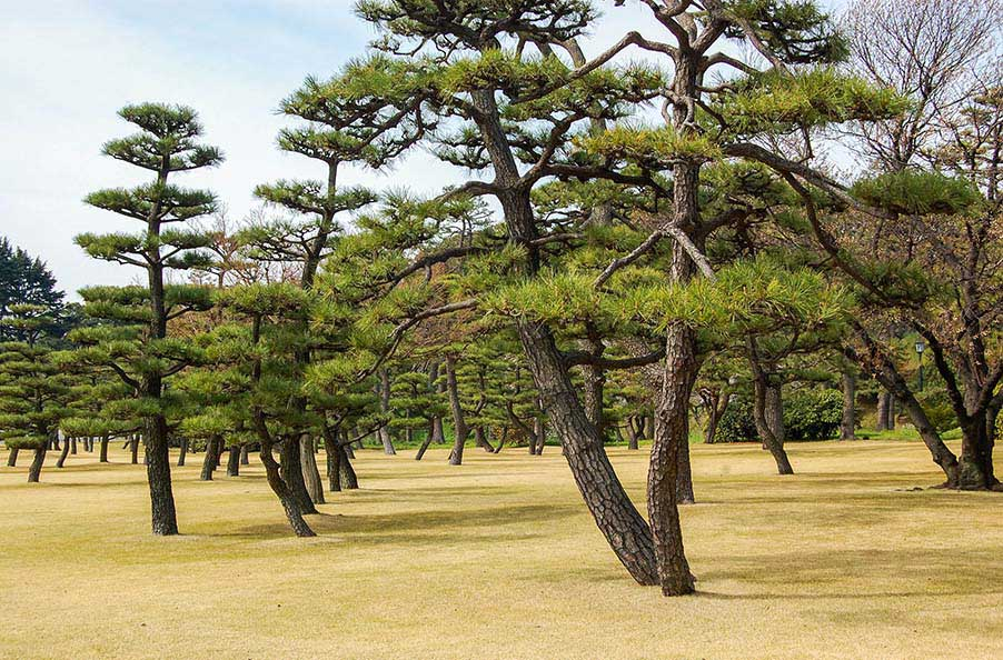 1_Odd-Trees