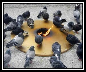 Homeless Pigeons