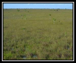 Everglades NP X 1