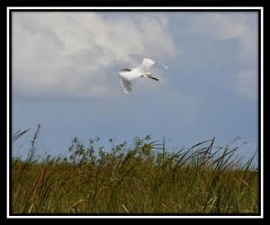 Everglades NP X 11