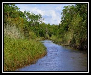 Everglades NP X 12